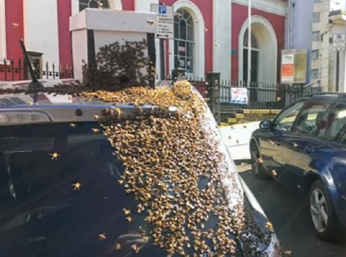 20000 Bees Chased a Car