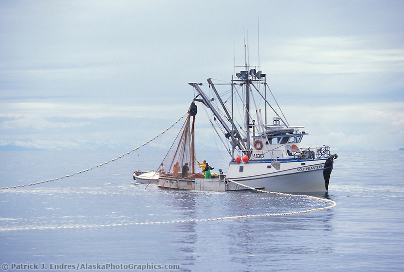 Purse seine drawn the net while commercial fishing for salmon in Prince William Sound, Alaska