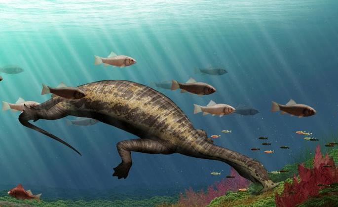 Ocean's first vegetarian reptile
