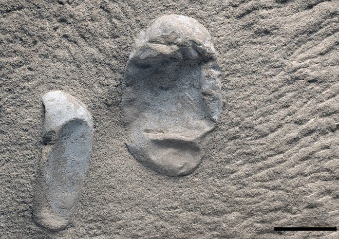 Fossilised eggs shed light on reign of pterosaurs