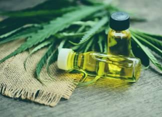 Canna-Business 101: Here's How to Break Into the Marijuana Boom