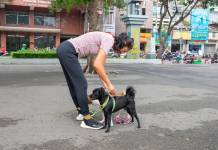 How Can Pet Ownership Improve Your Health?