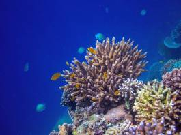 Scientists Discover Deep-Sea Coral Gardens in Mysterious Underwater Canyons