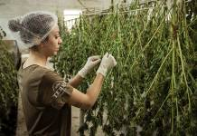 Cannabis for Women's Health