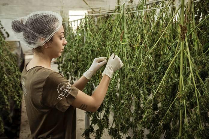 Cannabis for Women's Health