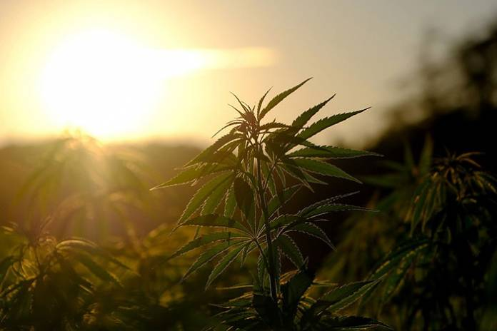 The Essential Guide to Starting a Hemp Firm