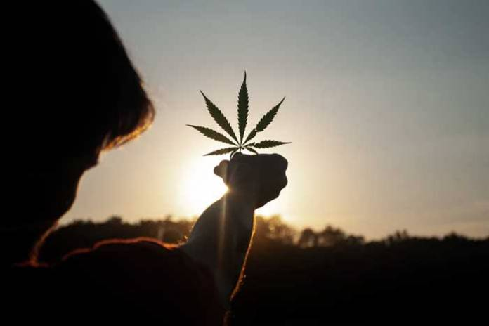 4 Interesting Facts You May Not Know About Cannabis